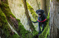 Beautiful mutt black dog amy in forest close up Stock Image