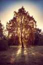 Beautiful mystic tree with nice lighting Stock Image