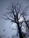 Beautiful natural black tree wallpaper great shine