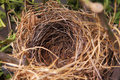 A beautiful natural empty birds nest in a tree Royalty Free Stock Photo