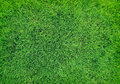 Beautiful natural green grass texture new Royalty Free Stock Photography