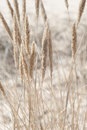 Beautiful nature abstract background of sea grass Stock Photo