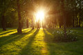 Beautiful nature at evening in spring forest, trees with sun ray Royalty Free Stock Photo