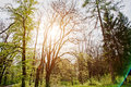 Beautiful nature  in the misty spring forest with sun rays Royalty Free Stock Photo