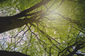 Beautiful nature at morning in the misty spring forest Royalty Free Stock Photo