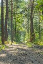 Beautiful nature at morning in the misty spring forest with sun rays. Forest with Sun-Rays. vertical photo Royalty Free Stock Photo
