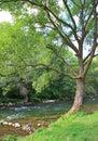 Beautiful nature in region Liptov, Slovakia