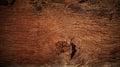 Beautiful nature texture of bark wood use as natural backgroun Royalty Free Stock Photo