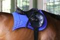 Beautiful new leather saddle on horseback for riders Royalty Free Stock Photo