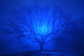 A  beautiful oak tree in blue evening fog Royalty Free Stock Photo