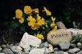 Beautiful ocean rocks with peace Royalty Free Stock Photo