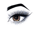 Beautiful open female eye with long eyelashes is isolated on a white background. Makeup template illustration. Sketch