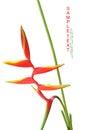 Beautiful Orange Flowers (Bird...
