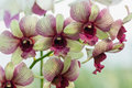 Beautiful orchid on the background nature close up Royalty Free Stock Image