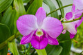 Beautiful  orchid flower with green tropical plants Royalty Free Stock Photo