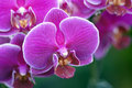 Beautiful orchid flowers closeup picture of Stock Image