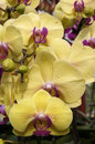 Beautiful orchid flowers closeup picture of Stock Images
