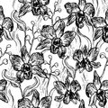 Beautiful Orchid. Hand drawn set isolated on white background black contour sketch seamless pattern, card banner design. Vector Royalty Free Stock Photo