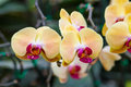 Beautiful orchid yellow and pink on green background Stock Photo