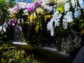 Beautiful orchids flower garden lifestyle thailand Royalty Free Stock Photo