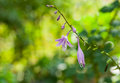 Beautiful ornamental bell flower reaches its delicate sprig to you Royalty Free Stock Photo