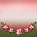 Beautiful painted rose on abstract background for congratulation Royalty Free Stock Photo
