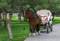 Beautiful pair - horse and cart Stock Photography