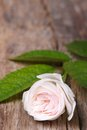 Beautiful pale pink rose on wooden board vertical close up Royalty Free Stock Photo
