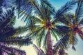 Beautiful palm tree on blue sky Royalty Free Stock Photo