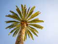 Beautiful palm tree with blue sunny sky Royalty Free Stock Photo