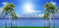 Beautiful palm tree on green field with blue sea water backgroun background use as natural scene Stock Photos