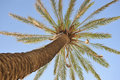 Beautiful palm tree over blue summer sky Stock Images