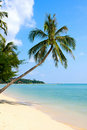Beautiful palm tree over white sand beach Royalty Free Stock Photography
