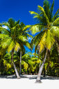 Beautiful palms on sandy beach with clear sand Royalty Free Stock Photos