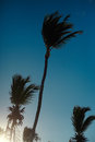 Beautiful palms on sky background Royalty Free Stock Photo