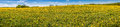 Beautiful panorama: the dandelion field and blue sky. Royalty Free Stock Photo