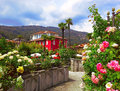 Beautiful panorama, spring blooming roses in the region Piedmont, Stresa, Northern Italy. Royalty Free Stock Photo