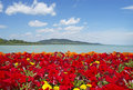 Beautiful panorama to Lake Balaton Royalty Free Stock Images