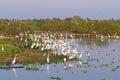 Beautiful Pantanal landscape, South America, Brazil Royalty Free Stock Photo