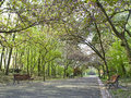 Beautiful park alley Royalty Free Stock Photo