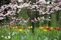 Beautiful park garden in spring. Royalty Free Stock Image