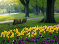 Beautiful park in spring Royalty Free Stock Photography