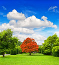 Beautiful park trees over dramatic blue sky autumn formal garden Royalty Free Stock Photography