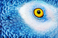 Beautiful parrot eye Royalty Free Stock Photo