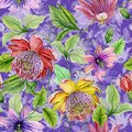 Beautiful passion flowers passiflora on climbing twigs with leaves and tendrils on purple background. Seamless floral pattern.