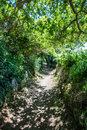 Beautiful path with green foliage and summer shadows for future Royalty Free Stock Photo
