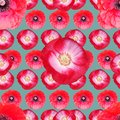 Beautiful ped poppies. Seamless floral photo background. Digital mixed media artwork for wrapping paper, wallpaper design, textile Royalty Free Stock Photo