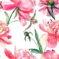 Beautiful peonies flowers watercolor painting seamless pattern Royalty Free Stock Image