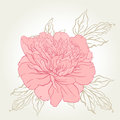 Beautiful peony bouquet design on beige background vector illustration Stock Photos