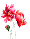 Beautiful peony flower watercolor illustration Stock Photos